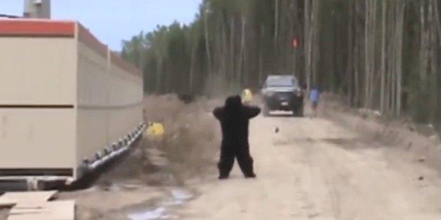 VIDÉO. Victime d'une blague, il fuit à toutes jambes son collègue déguisé en ours