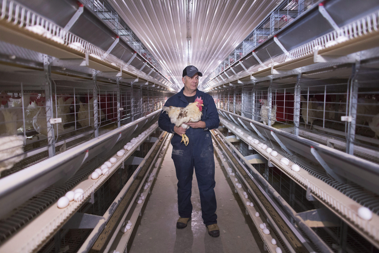 roger palissero chicken farmer