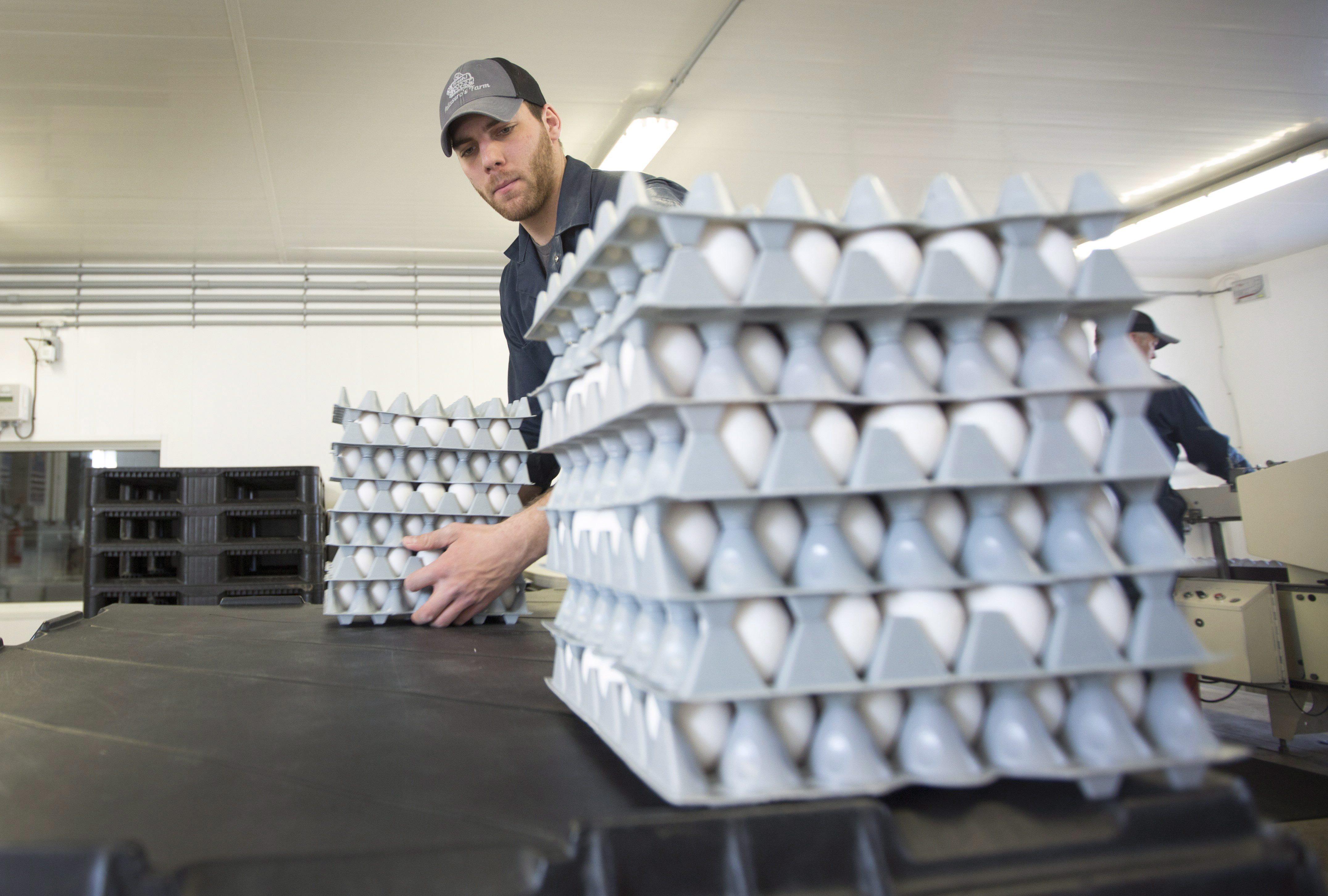 jake pelissero egg farmer