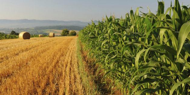 L'assurance agricole de Saham sera sur le marché en 2016