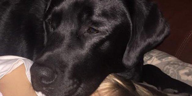 Mitten in der Nacht warnt dieser Hund die Mutter - was sie bei ihrem Sohn entdeckt, erschreckt sie zu Tode