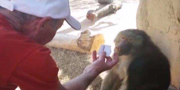 La réaction de ce babouin à un tour de magie est géniale