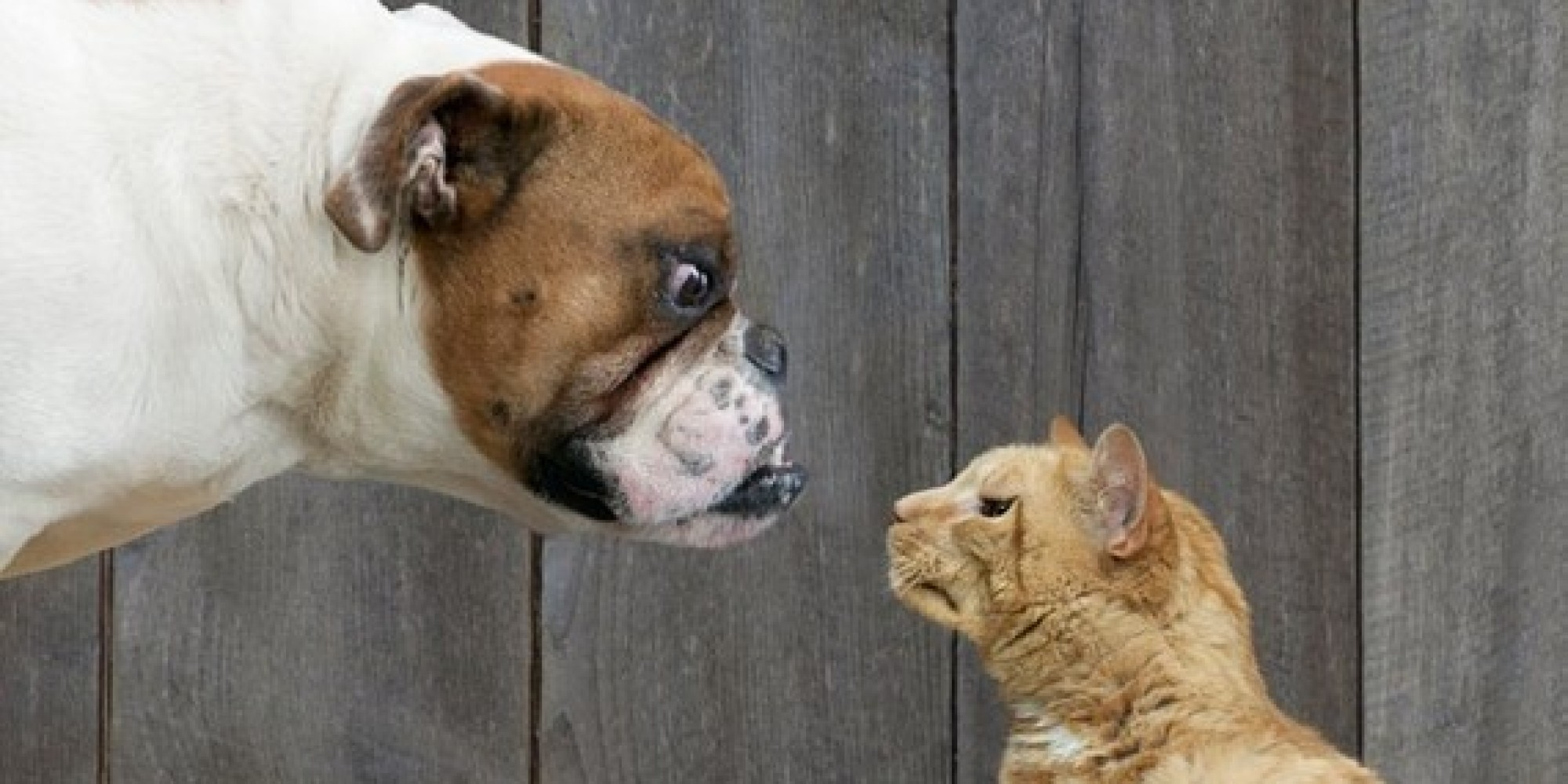 Cat People Vs. Dog People: Can't We All Get Along?