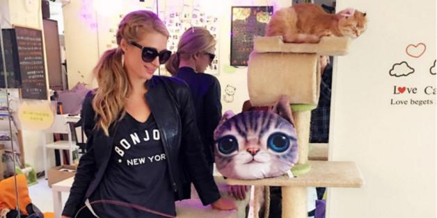Paris Hilton ist begeistert vom Konzept des Katzencafés