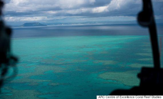 coral reef great barrier bleaching
