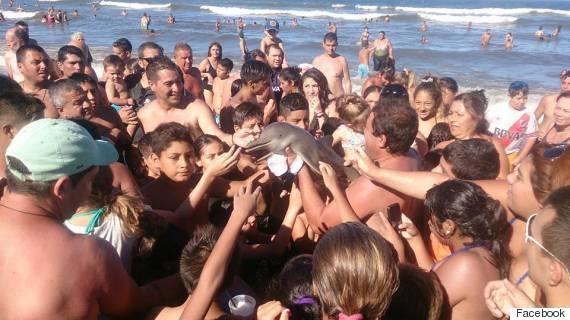 dolphin selfie argentina
