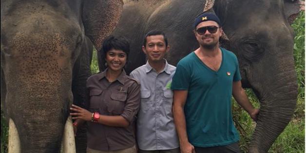 """Leonardo DiCaprio und die Mitarbeiter von """"Forest Nature and Environment Aceh"""" kämpfen für den Lebensraum dieser Elefanten"""