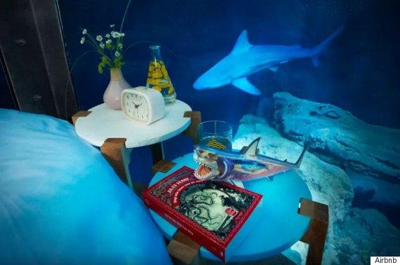shark tank airbnb