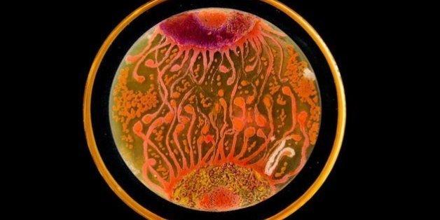 2015년 ASM 아가르 예술전에서 '피플스 초이스' 상을 받은 페닐의 '세포에서 세포'