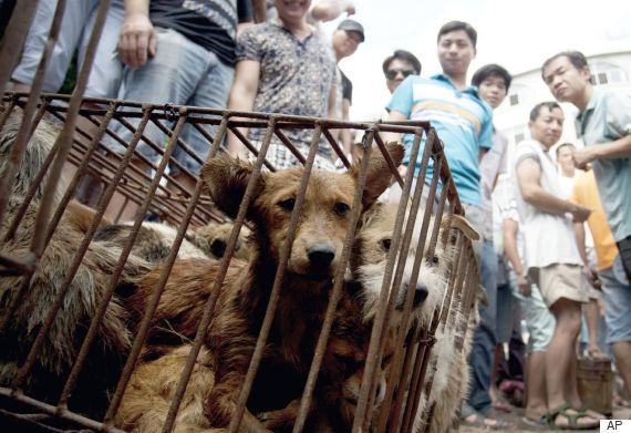 roasts dogs yulin