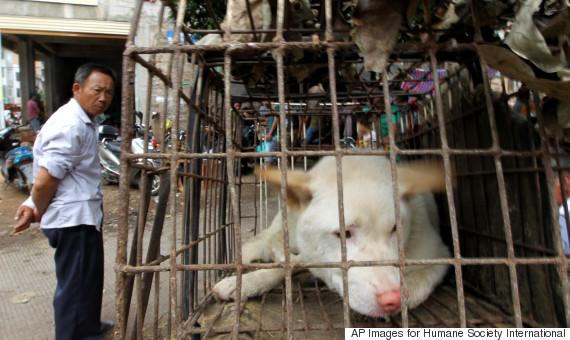 dog festival yulin