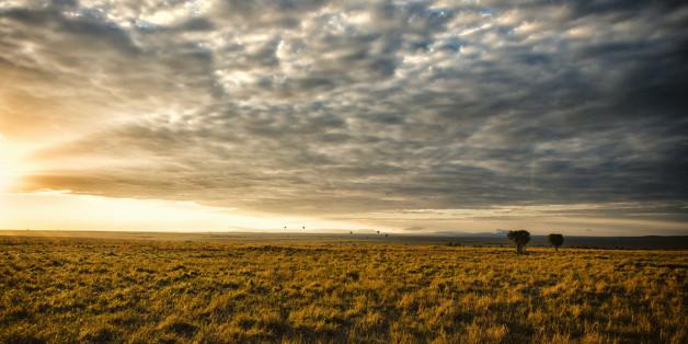Open savannah grassland at sunset, Masai Mara National Reserve, Kenya.