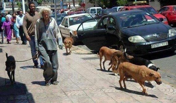 dame aux chiens