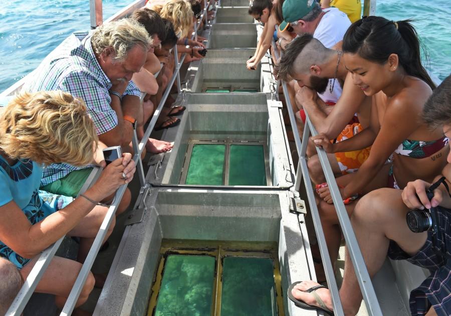 tourist great barrier reef