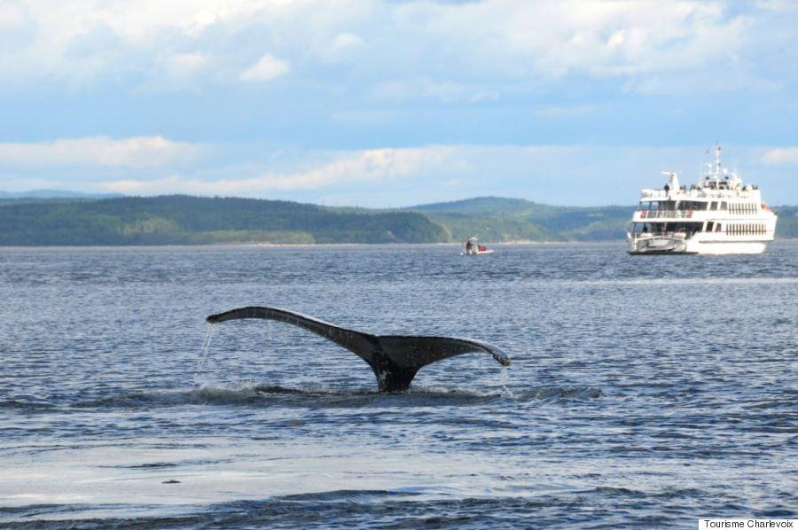 whale charlevoix