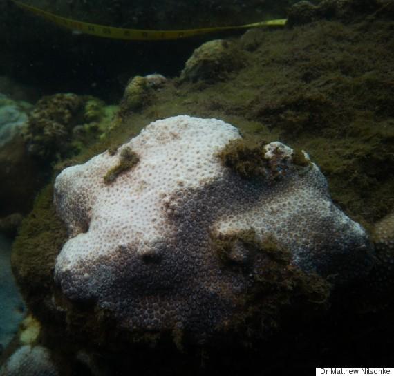 coral bleaching sydney harbour