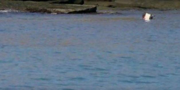 TV-Team dreht vor unbewohnter Insel - bis etwas Ungewöhnliches an der Küste erscheint