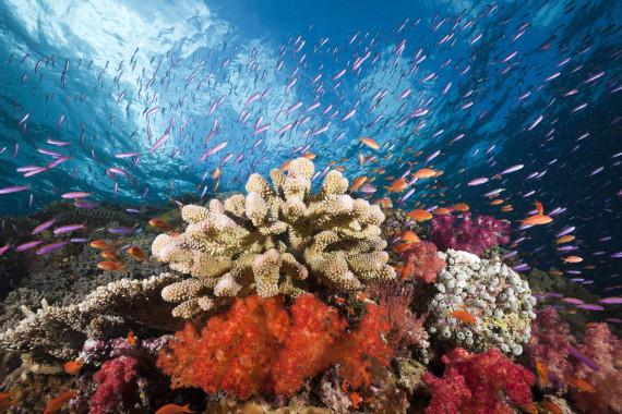 healthy coral reef