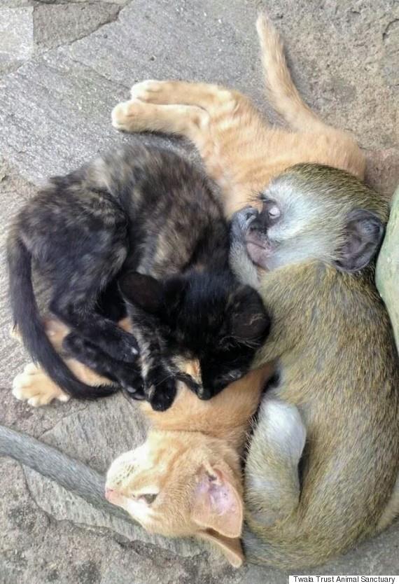 만나기만 하면 친구가 되는 원숭이 사진 허프포스트코리아