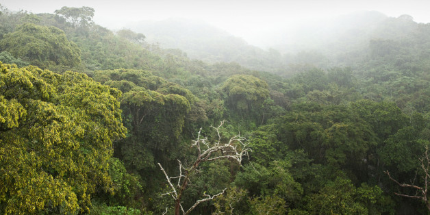 Durch diese eine Maßnahme könnte die ganze Menschheit ernährt werden - ohne weiteres Waldsterben