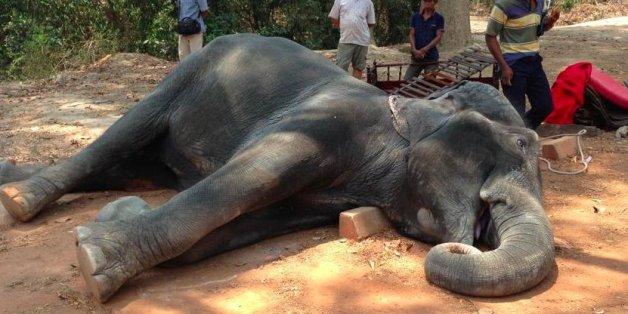 Elefant stirbt vor Erschöpfung, nachdem er Touristen durch die Hitze von Kambodscha getragen hatte