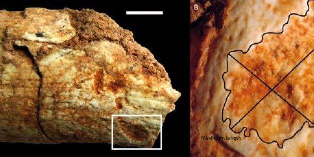 Cet os retrouvé au Maroc prouve que les hommes préhistoriques servaient de repas aux carnivores