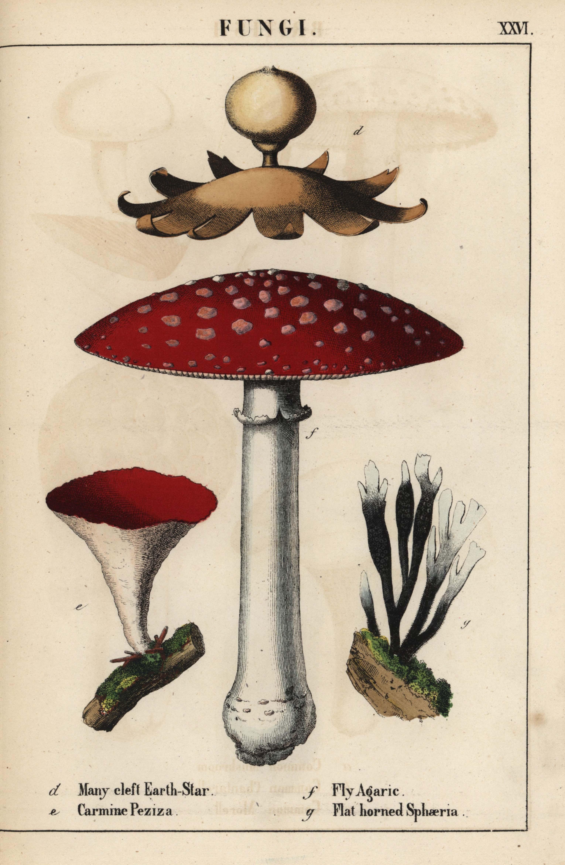 pharmaceuticals mushroom