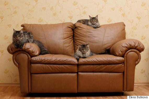 cat sofa