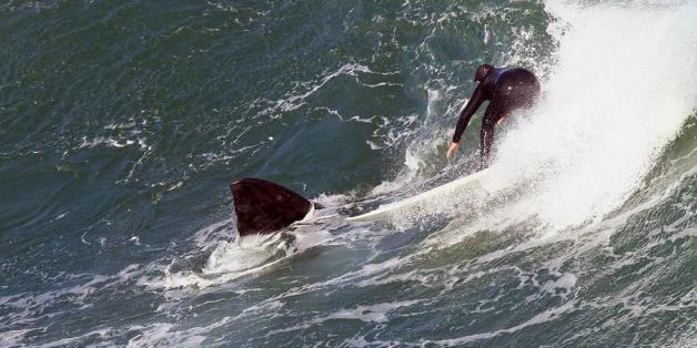 Surfer trainieren - dann taucht eine Flosse auf