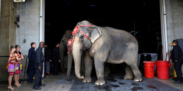 Performing elephants wait to appear in their final show for the Ringling Bros and Barnum & Bailey Circus in Wilkes-Barre, Pennsylvania, U.S., May 1, 2016. REUTERS/Andrew Kelly