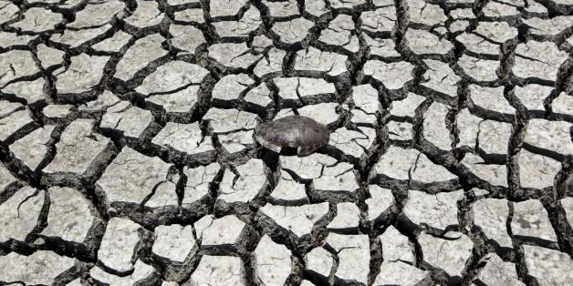 50 Grad Hitze: Neue Studie zeigt, wo bald kein Mensch mehr leben kann
