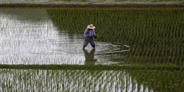 A farmer plants saplings in a rice field in Satsumasendai, Kagoshima prefecture, Japan, July 8, 2015. REUTERS/Issei Kato       TPX IMAGES OF THE DAY