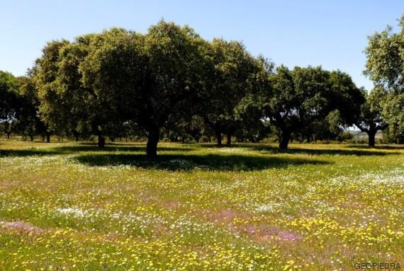 floracion cabañeros