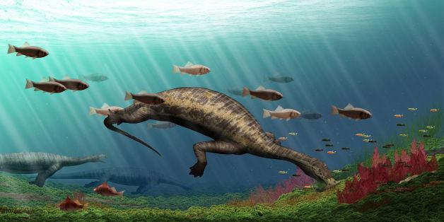 C'est le plus vieux reptile marin herbivore découvert.