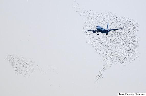 bird airplane
