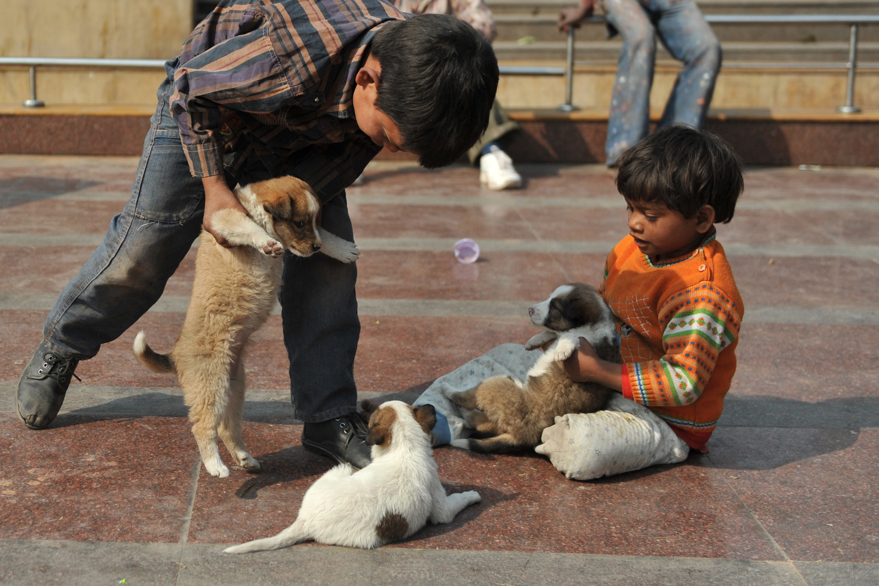 kids with puppies