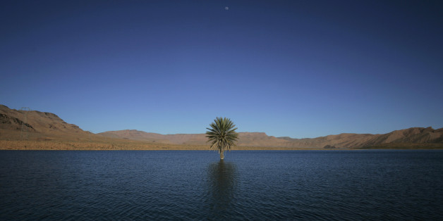A palm tree grows in the Errachidia reservoir near the Ziz oasis March 7, 2009. When Moroccan rivers start to dry out in the north of the Sahara desert they create spectacular oasis. Huge palm trees grow around the water, and the Berbers cultivate the surrounding land through channelled irrigation systems. Picture taken March 7, 2009.      REUTERS/Rafael Marchante         (MOROCCO TRAVEL ENVIRONMENT)