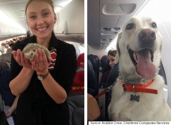 airplane pets fort mcmurray