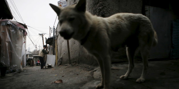 A man (L) works outside his shack as a stray dog wanders an alley at Guryong village in Seoul, South Korea, April 2, 2015. Demolition of Guryong, the last slum in Seoul's glitzy Gangnam district, is expected to start this summer after redevelopment plans were mired for years in squabbling among the city, district and developers, and even battling residents. Picture taken on April 2, 2015. REUTERS/Kim Hong-Ji