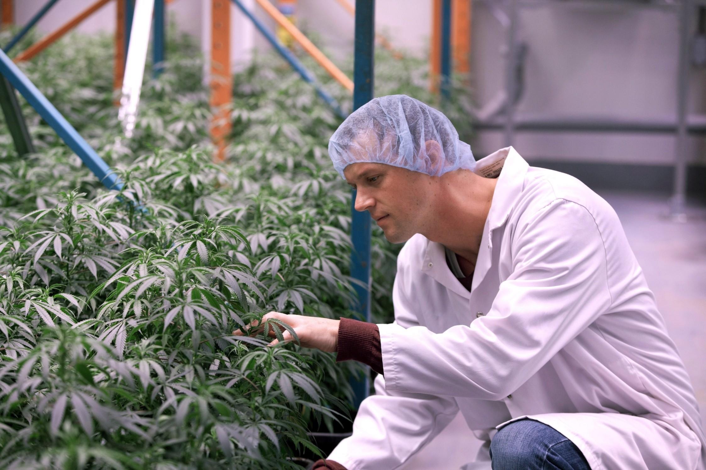 organigram cannabis canada