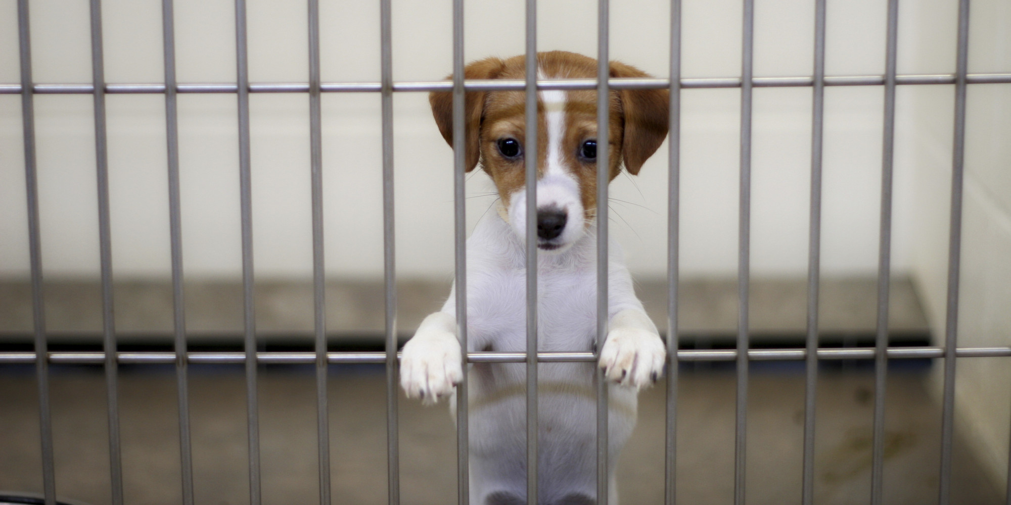 Is the End in Sight for the Use of Shelter Dogs in Experiments in