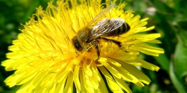World Bee Day: To Be(e) or Not to Be(e) -- The Case for Proclaiming 20th May as World Bee Day