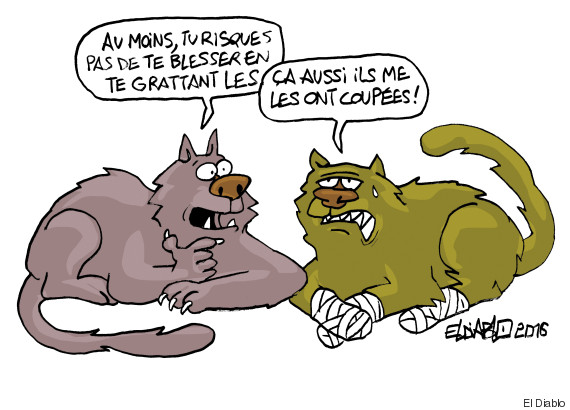 chat sans griffe