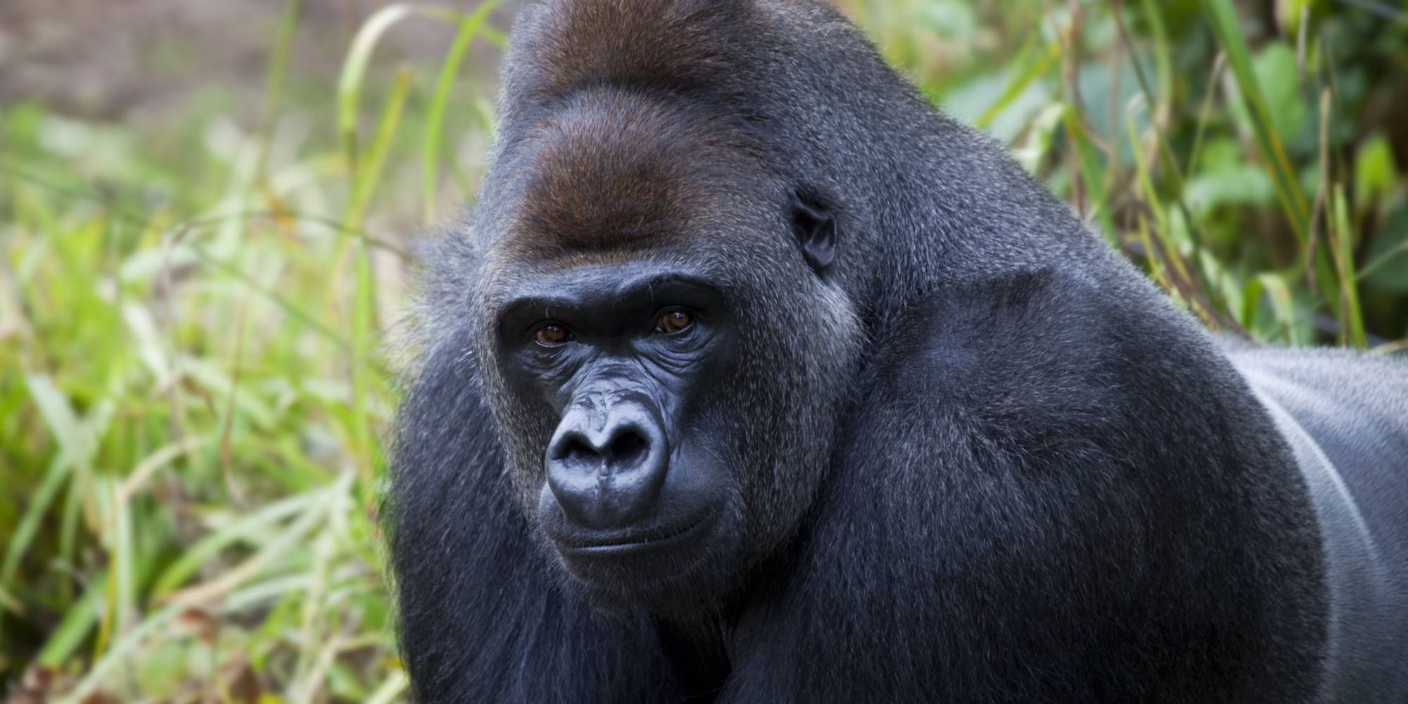 Is Your Smartphone Killing Gorillas?
