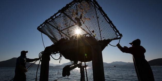 Die Zukunft der ökologisch nachhaltigen Landwirtschaft liegt im Meer