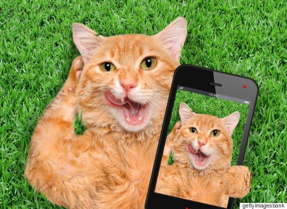 phone cats