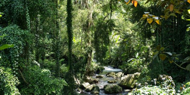 Norwegen will die Abholzung des Regenwaldes eindämmen