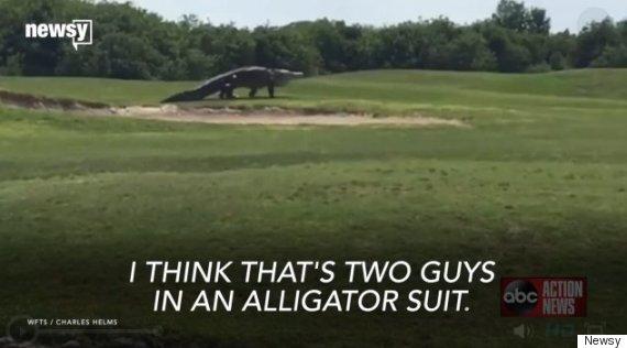 florida golf course alligator