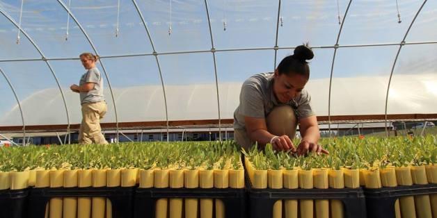 Nachhaltigkeit hinter Gittern: Wie amerikanische Inhaftierte die Umwelt retten wollen