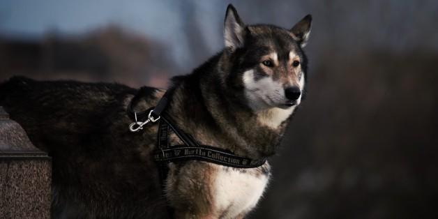 L'origine du chien ne serait pas à chercher uniquement en Asie, mais également en Europe.